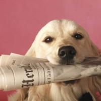 1) leggi il giornale!