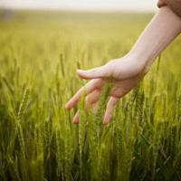 L' agricoltura è in forte crescita