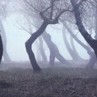 Salire sugli alberi con prudenza