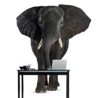 L'elefante che tutti vogliono vedere
