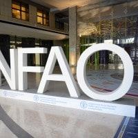 Stage retribuiti alla FAO: requisiti e come candidarsi