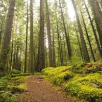 Addetti forestali
