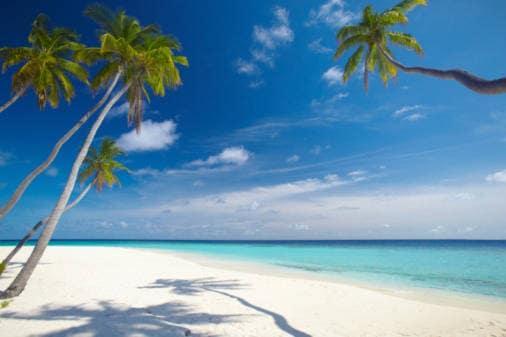 Curatore isola corallina