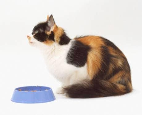 3. Controllore qualità del cibo per gatti