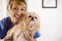 Tecnico veterinario