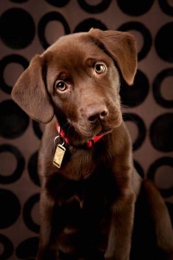 Psicologo canino