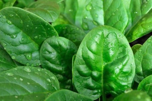 Tutte le verdure verdi
