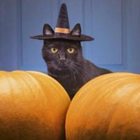 Gatto nero e streghe