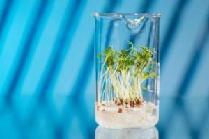 OGM: pro e contro