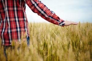Seconda prova maturità Istituto professionale per l'agricoltura e lo sviluppo rurale