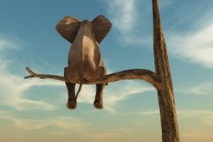 Partenogenesi: gli animali che si riproducono da soli!