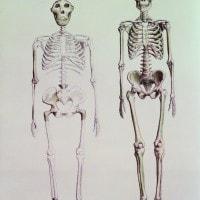 Datazione antico scheletro chiavi