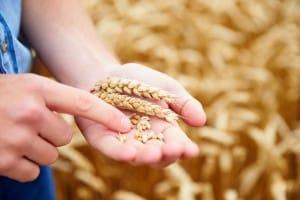 Seconda prova Istituto tecnico agrario 2020