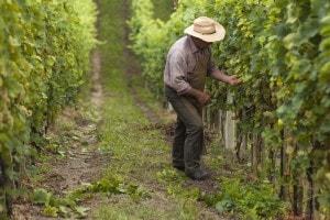 Lavoro stagionale in Italia