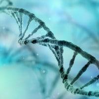 Il DNA: struttura, scoperta e funzione