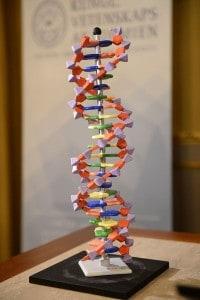 Un modello di DNA, posizionato su un tavolo durante la conferenza per annunciare il vincitore del Premio Nobel per la Chimica nel 2015