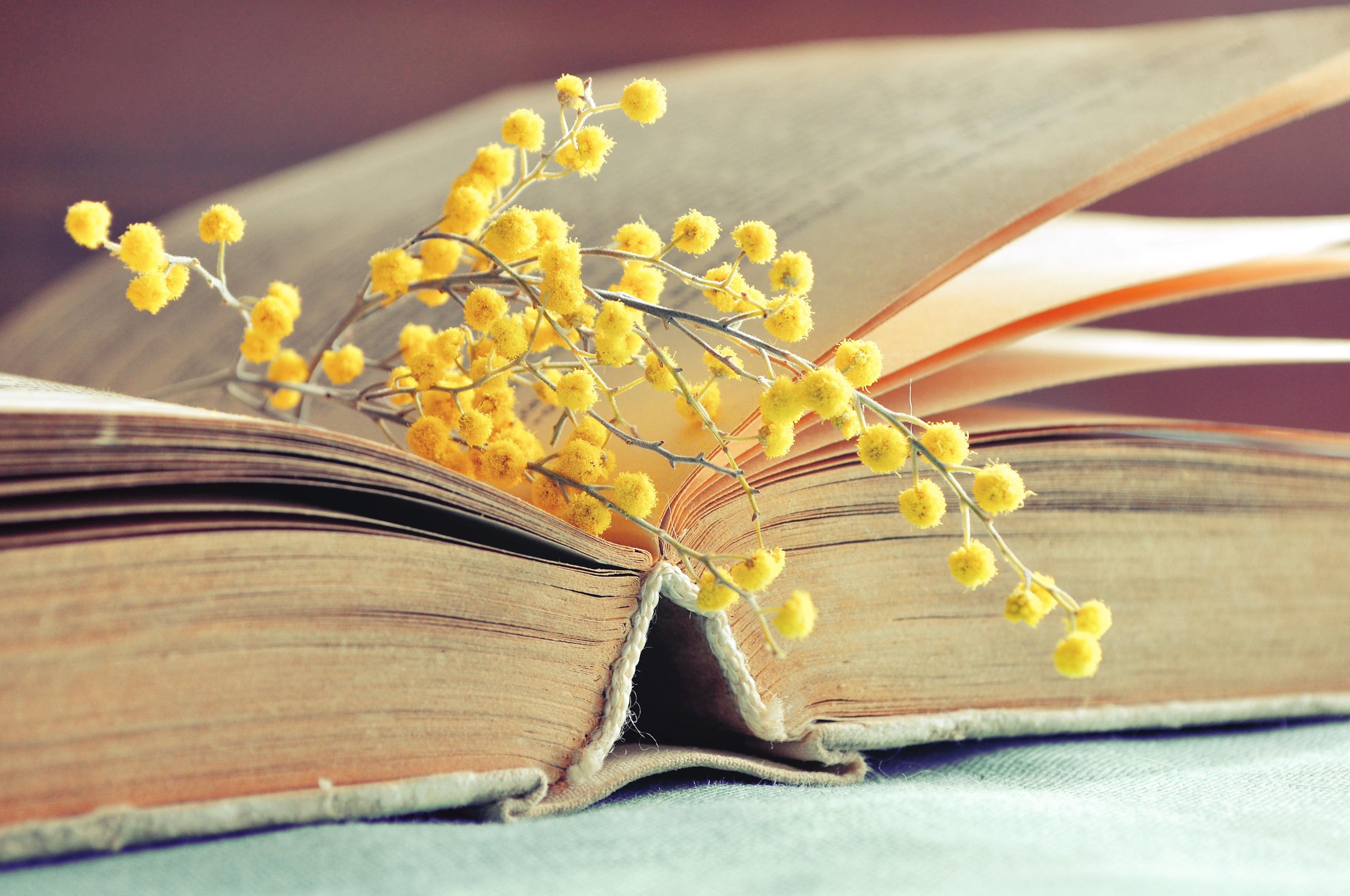 Festa Della Donna Frasi Dalla Letteratura Studentiit