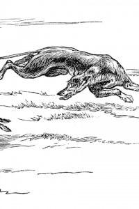 Veltro, veloce e agile cane da caccia (levriero)