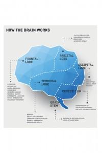"""Ad ogni parte del cervello corrisponde una funzione : ad esempio, """"si legge"""" col lobo occipitale, mentre si imparano le lingue con quello temporale"""