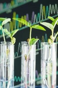 Gli studi di genetica di Mendel presero le mosse dalle piante.