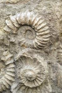 L'osservazione e lo studio dei fossili fu di fondamentale importanza per il lavoro di Charles Darwin