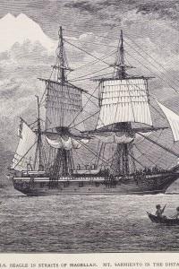 Illustrazione dell'HMS Beagle che ospitò Charles Darwin