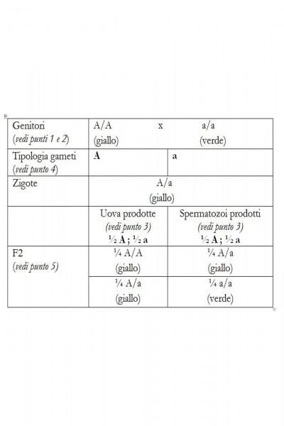 Nella F2 vediamo che il rapporto complessivo è appunto: 1A/A : 2A/a : 1a/a