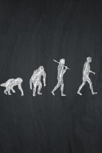 Rappresentazione delle fasi dell'evoluzione umana