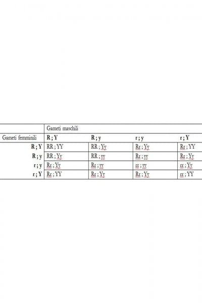 Notiamo che alla varietà dei genotipi della F2 mostrata in tabella corrispondono in realtà 4 fenotipi in rapporto 9:3:3:1.