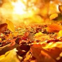 Equinozio di primavera ed equinozio di autunno: significato e caratteristiche