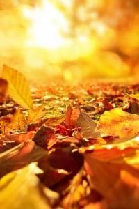L'equinozio di settembre segna l'inizio della stagione autunnale