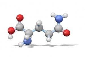 Glutammina: amminoacido polare