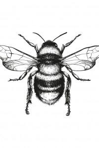 Bacone si paragona a un'ape che trasforma il nettare dei fiori in miele