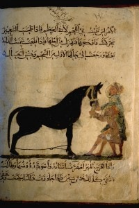 Manuale di un mamelucco sull'uso del cavallo