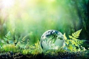 Tema argomentativo su ecologia, inquinamento e ambiente