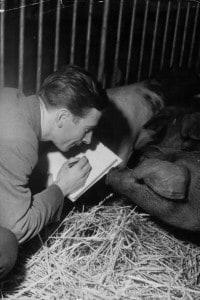 """L'animatore Eddie Radage in una fattoria nell'Hertfordshire in preparazione del suo film animato del libro """"Animal farm"""" di Geroge Orwell"""