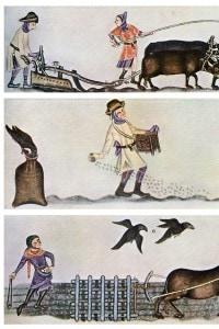 Agricoltura nel tardo Medioevo