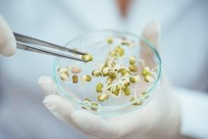 Come si creano gli OGM? A cosa servono?