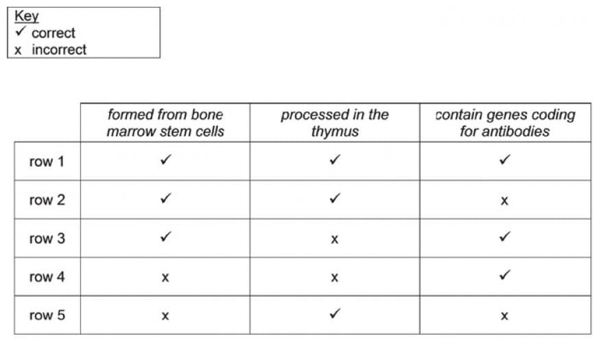 Which row is correct for the three given features of typical human B lymphocytes?