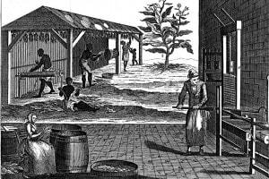 Varie fasi della produzione di tabacco, Virginia (USA), 1750. Schiavi che rotolano il tabacco essiccato e selezionano le foglie