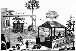 Schiavi in una piantagione di zucchero nelle Indie Occidentali, 1725