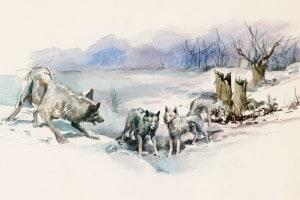 Branco di lupi. Il richiamo della foresta di Jack London