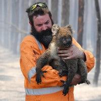 Un vigile del fuoco mette in salvo un koala