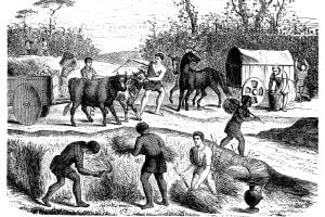 Agricoltura e contadini nell'antica Roma