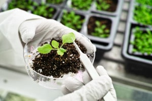OGM: vantaggi e svantaggi