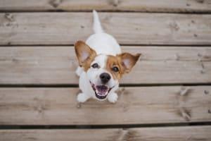 Montale esalta l'incondizionato affetto dei cani per l'uomo
