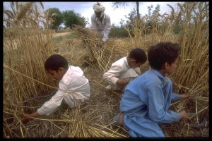 Storia di Iqbal: riassunto e analisi