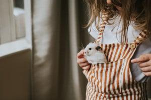 Tema sugli animali domestici