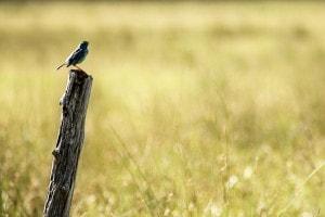 Il passero solitario: analisi, figure retoriche e spiegazione