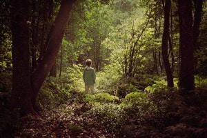 Una barca nel bosco: trama e commento